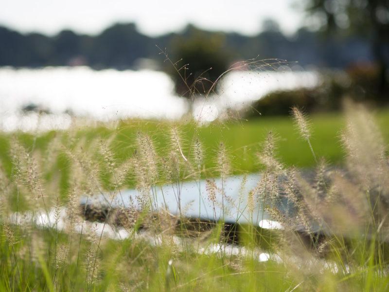 Grass_detail-4769_original