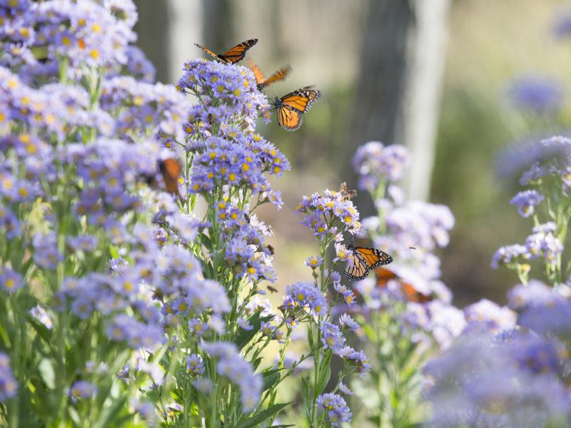 butterflies_afternoon-0682_original